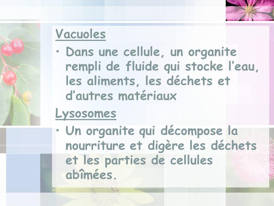 Vacuoles Dans une cellule, un organite rempli de fluide qui stocke l'eau, les aliments, les déchets et d'autres matériaux.