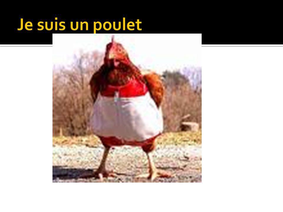 Je suis un poulet