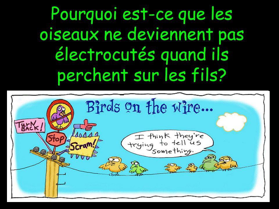 Pourquoi est-ce que les oiseaux ne deviennent pas électrocutés quand ils perchent sur les fils