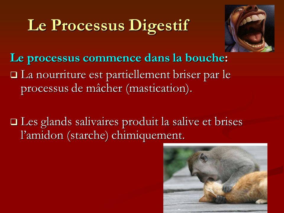 Le Processus Digestif Le processus commence dans la bouche: