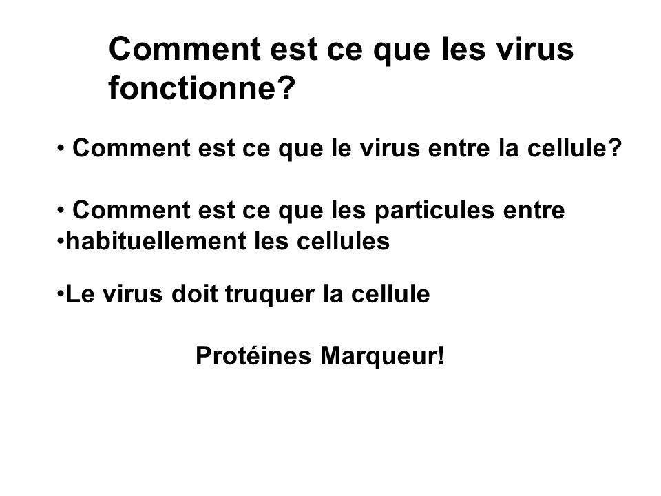 Comment est ce que les virus fonctionne
