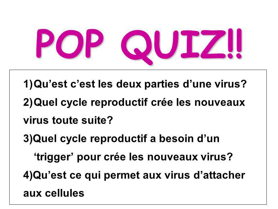 POP QUIZ!! Qu'est c'est les deux parties d'une virus