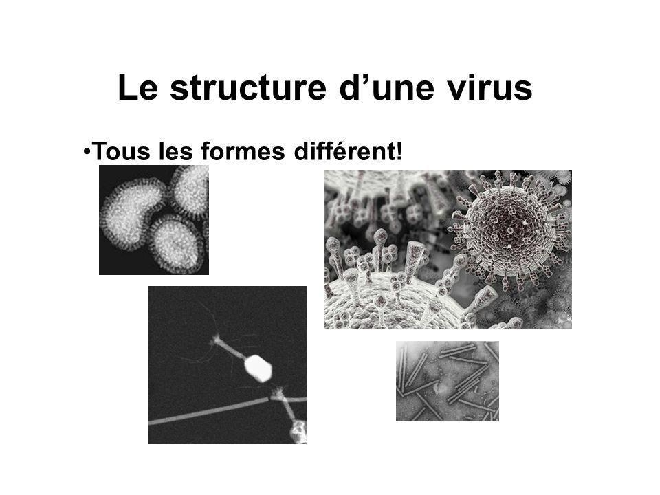 Le structure d'une virus