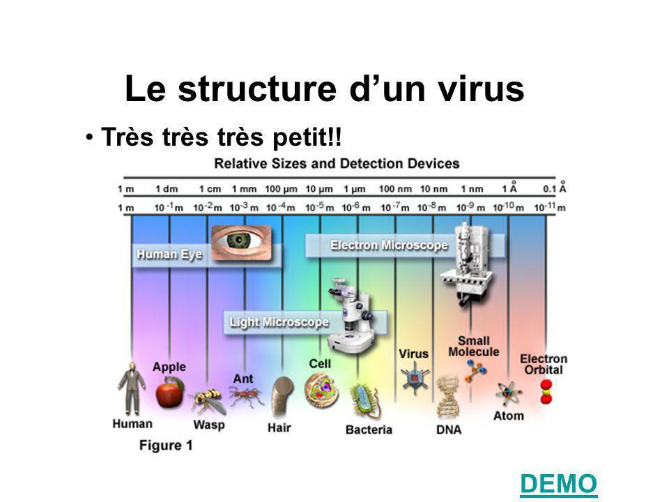 Le structure d'un virus