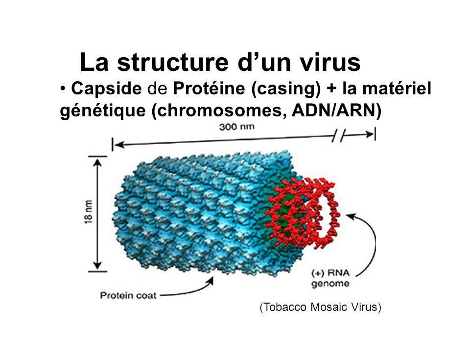 La structure d'un virus
