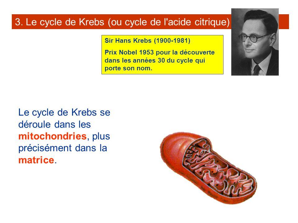 3. Le cycle de Krebs (ou cycle de l acide citrique)