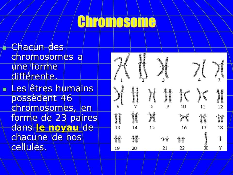 Chromosome Chacun des chromosomes a une forme différente.