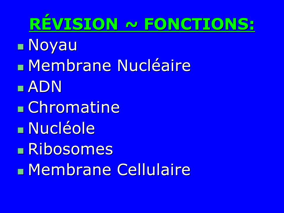 RÉVISION ~ FONCTIONS: Noyau. Membrane Nucléaire.