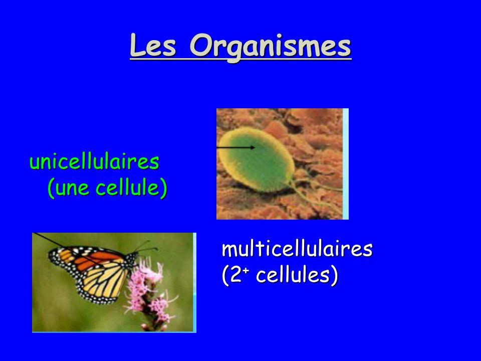 Les Organismes unicellulaires (une cellule)