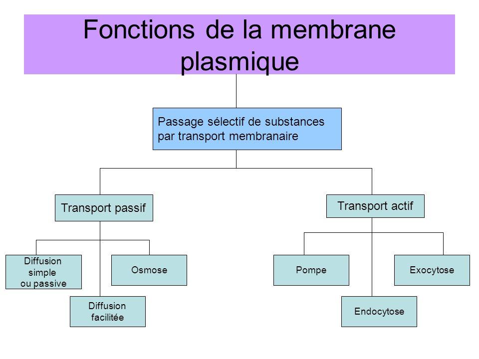 Fonctions de la membrane plasmique