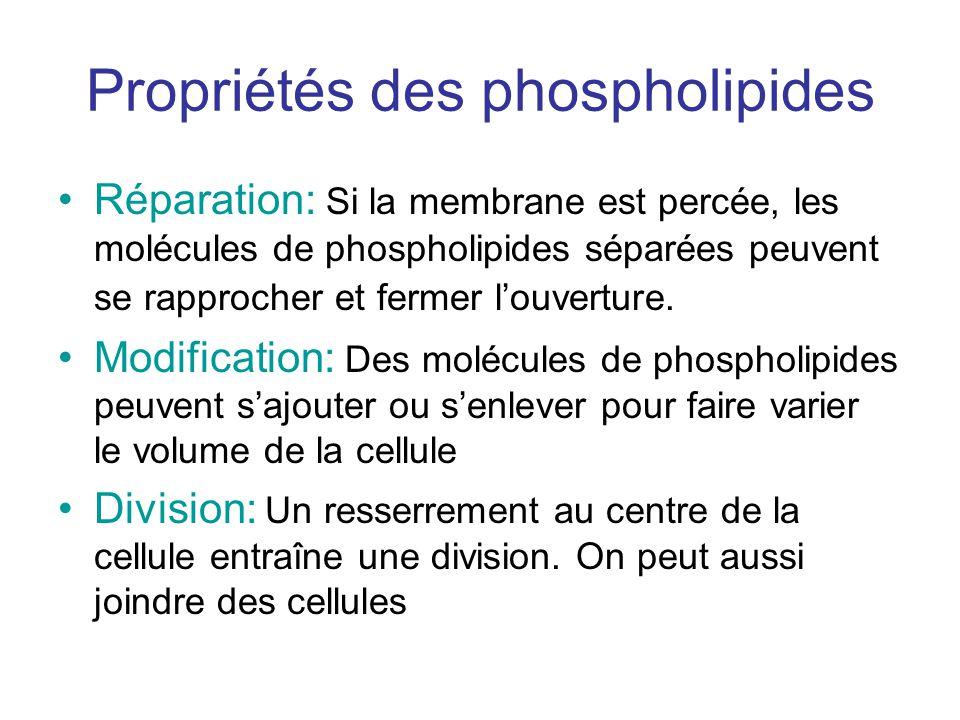 Propriétés des phospholipides