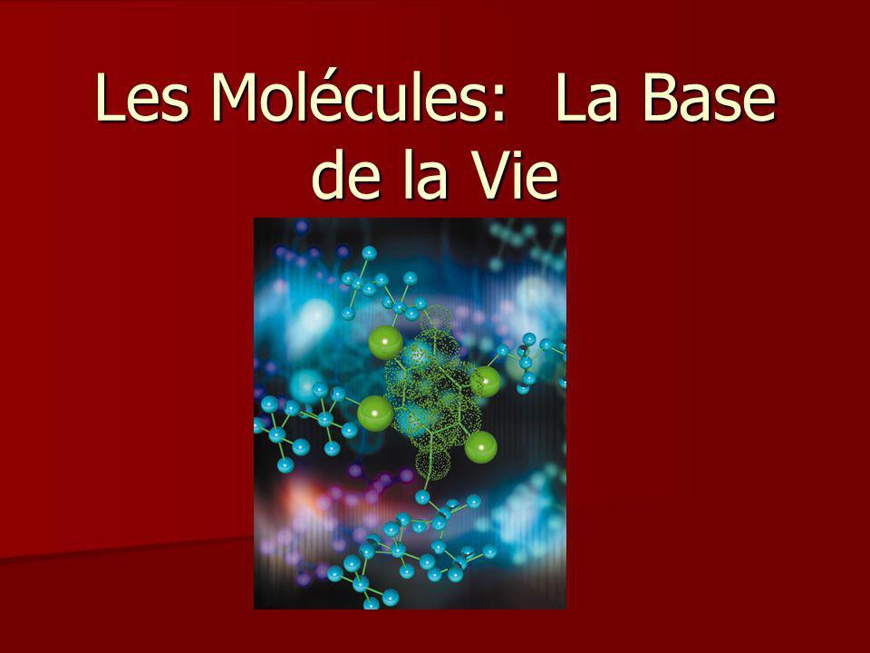 Les Molécules: La Base de la Vie