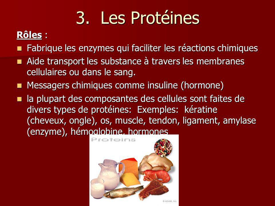 3. Les Protéines Rôles : Fabrique les enzymes qui faciliter les réactions chimiques.