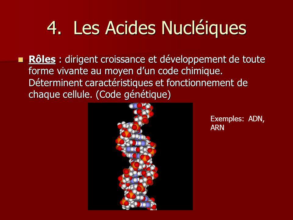 4. Les Acides Nucléiques