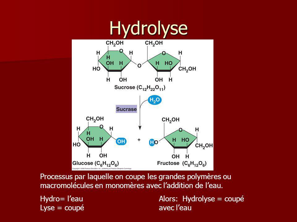 Hydrolyse Processus par laquelle on coupe les grandes polymères ou macromolécules en monomères avec l'addition de l'eau.