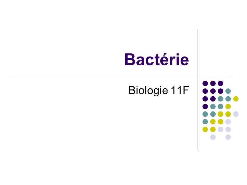 Bactérie Biologie 11F
