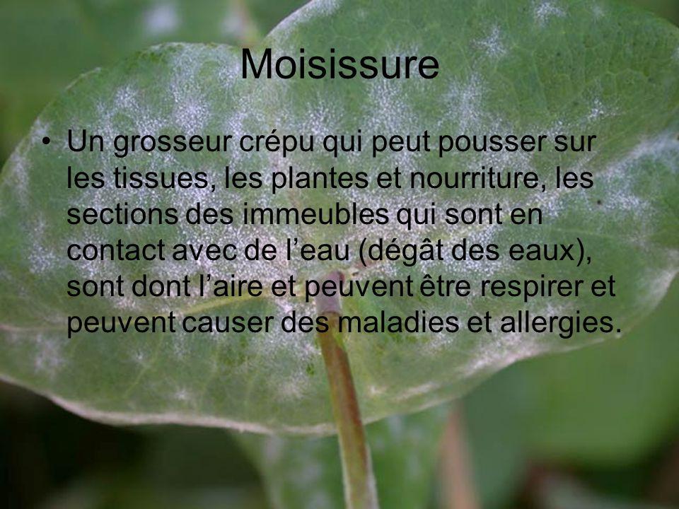 Moisissure
