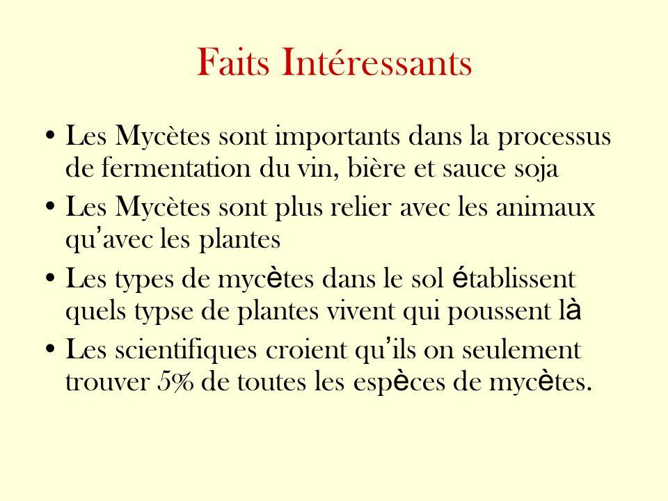 Faits Intéressants Les Mycètes sont importants dans la processus de fermentation du vin, bière et sauce soja.