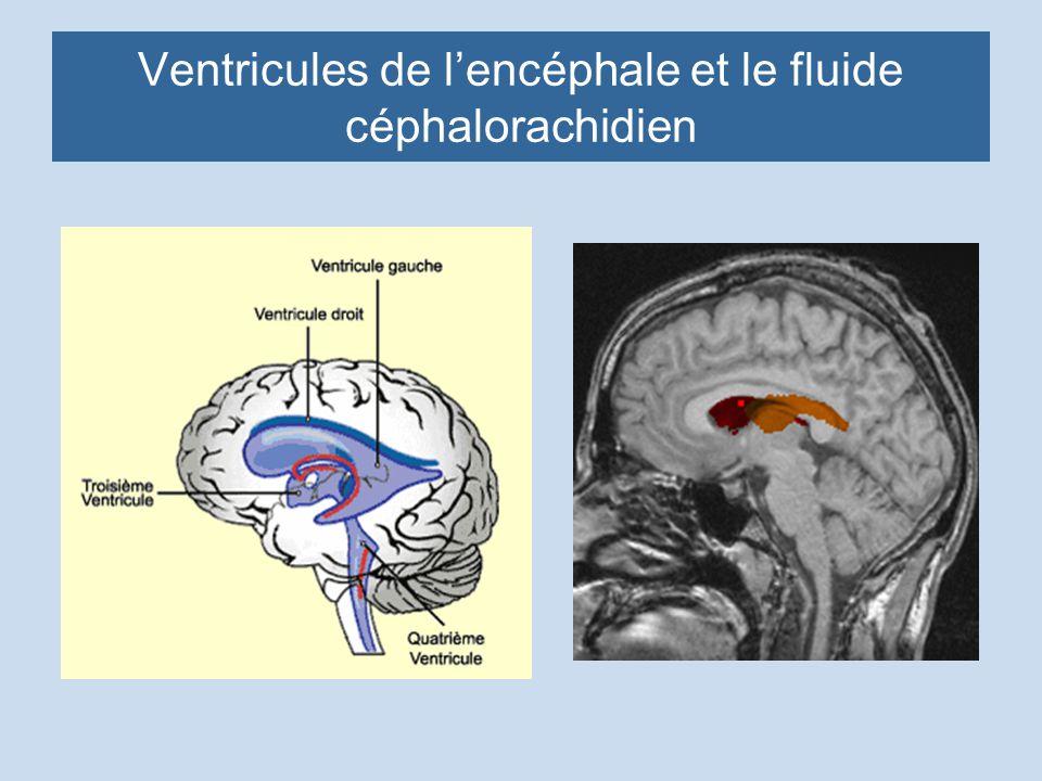Ventricules de l'encéphale et le fluide céphalorachidien