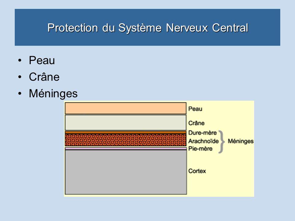 Protection du Système Nerveux Central