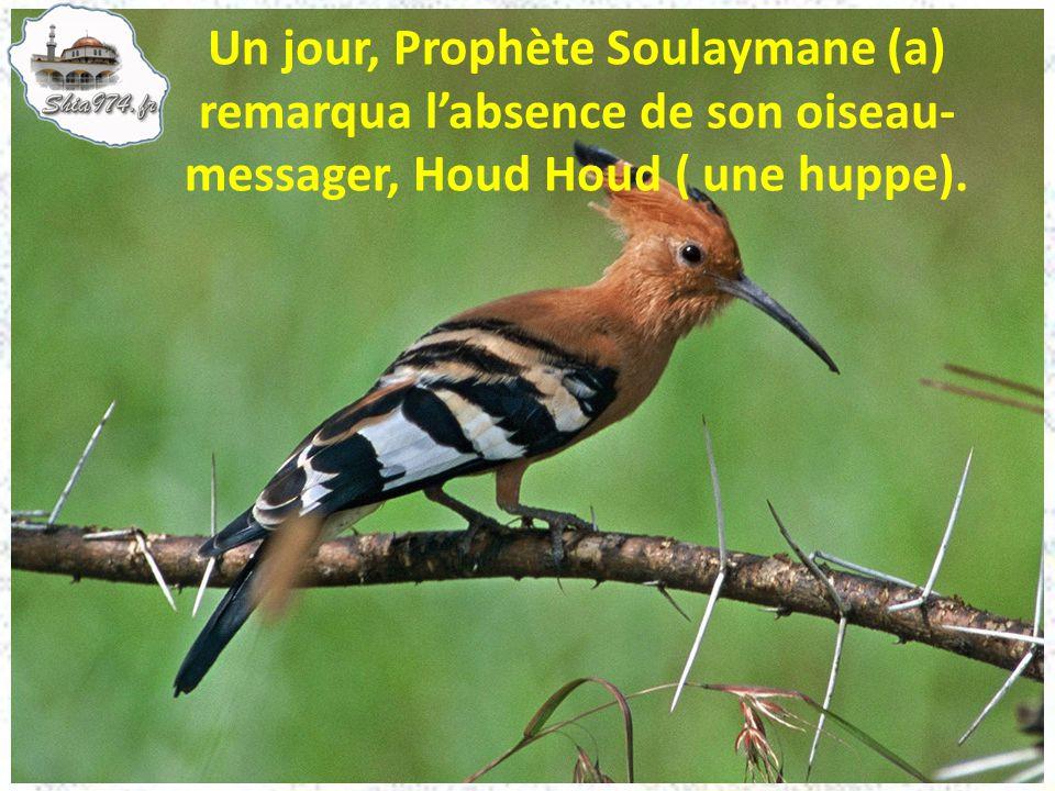 Un jour, Prophète Soulaymane (a) remarqua l'absence de son oiseau- messager, Houd Houd ( une huppe).