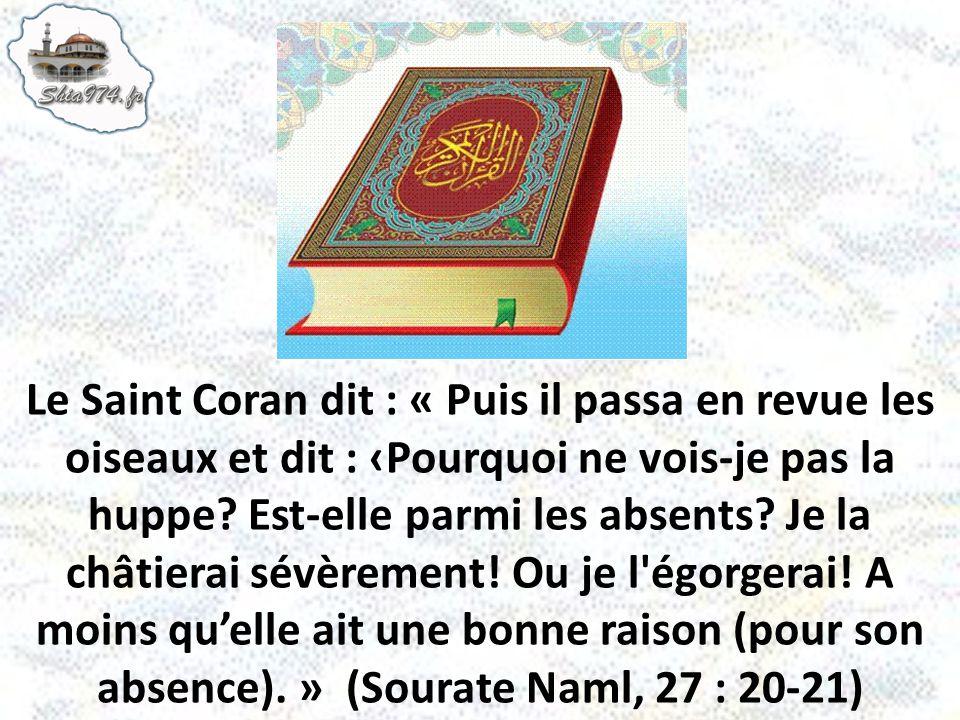Le Saint Coran dit : « Puis il passa en revue les oiseaux et dit : ‹Pourquoi ne vois-je pas la huppe.
