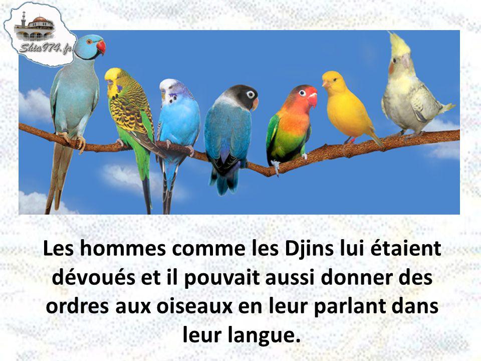 Les hommes comme les Djins lui étaient dévoués et il pouvait aussi donner des ordres aux oiseaux en leur parlant dans leur langue.
