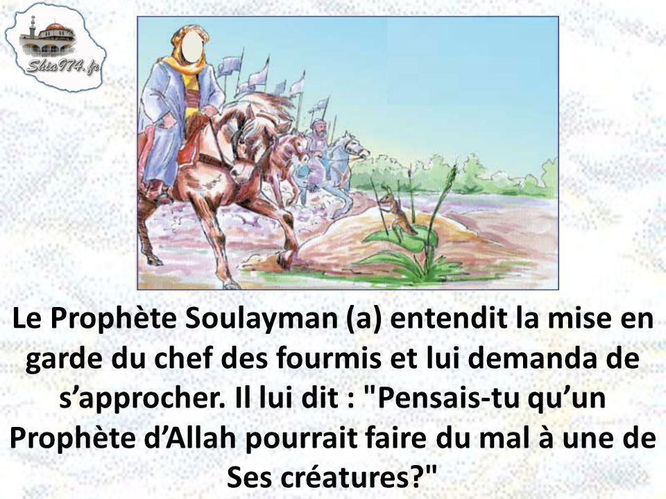 Le Prophète Soulayman (a) entendit la mise en garde du chef des fourmis et lui demanda de s'approcher.