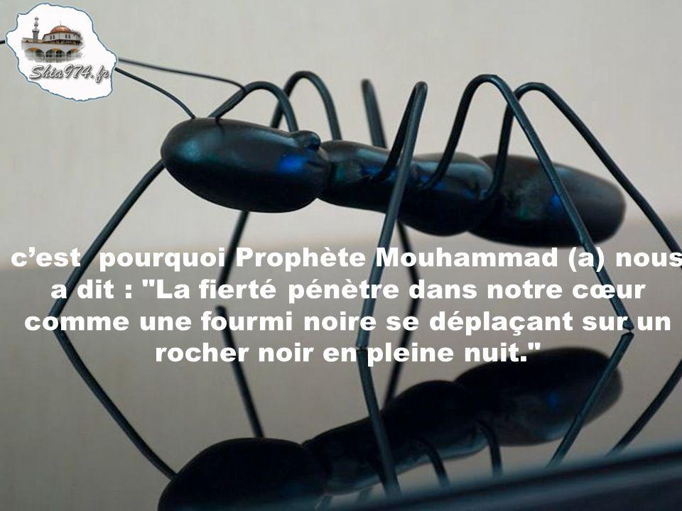 c'est pourquoi Prophète Mouhammad (a) nous a dit : La fierté pénètre dans notre cœur comme une fourmi noire se déplaçant sur un rocher noir en pleine nuit.