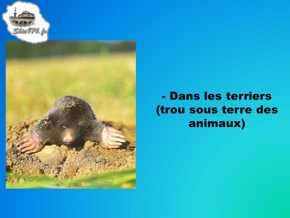 - Dans les terriers (trou sous terre des animaux)