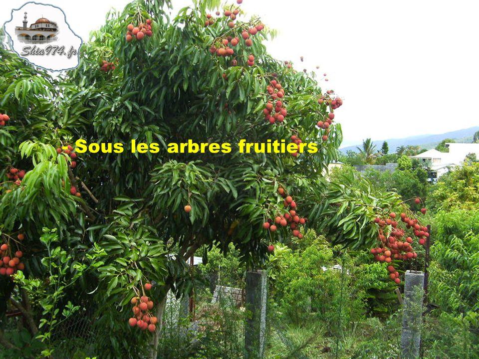- Sous les arbres fruitiers