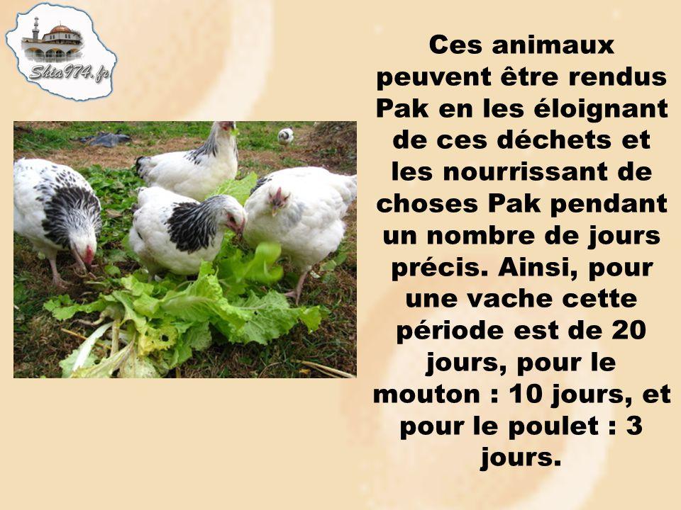 Ces animaux peuvent être rendus Pak en les éloignant de ces déchets et les nourrissant de choses Pak pendant un nombre de jours précis.