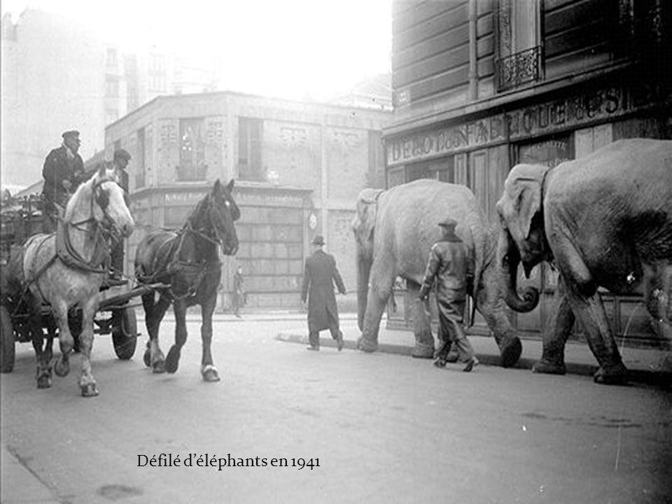 Défilé d'éléphants en 1941