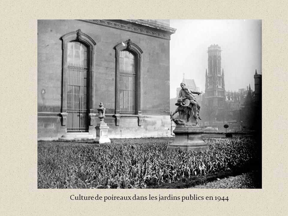 Culture de poireaux dans les jardins publics en 1944