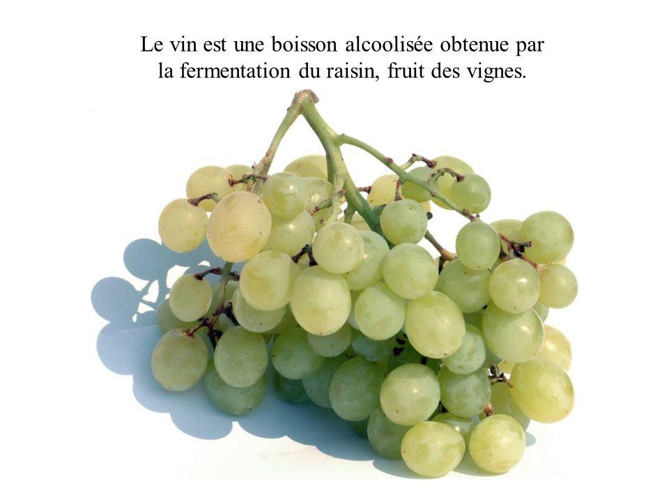 Le vin est une boisson alcoolisée obtenue par