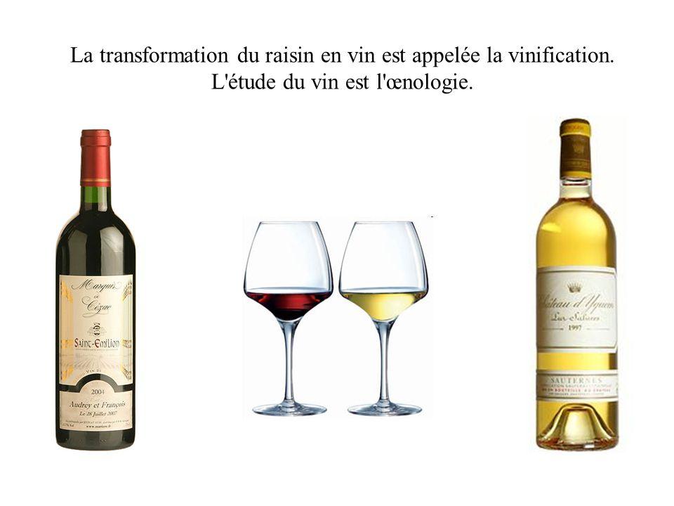 La transformation du raisin en vin est appelée la vinification
