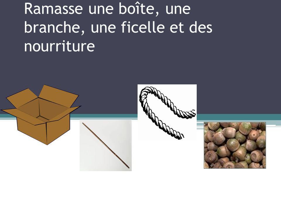 Ramasse une boîte, une branche, une ficelle et des nourriture