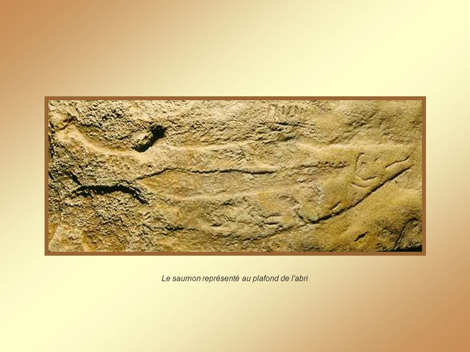 Le saumon représenté au plafond de l abri