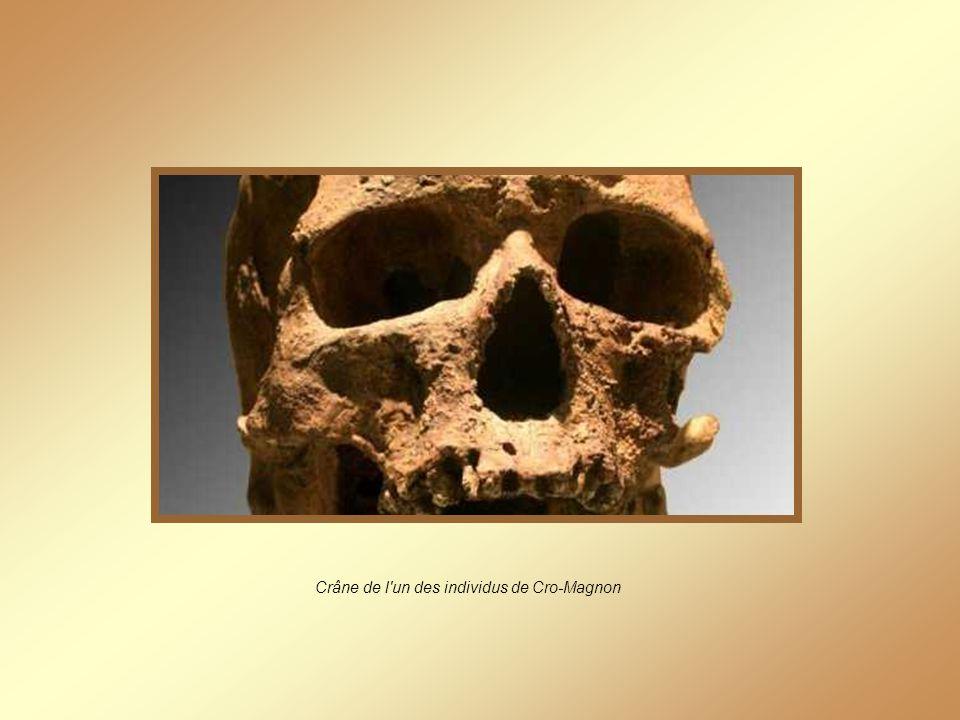 Crâne de l un des individus de Cro-Magnon