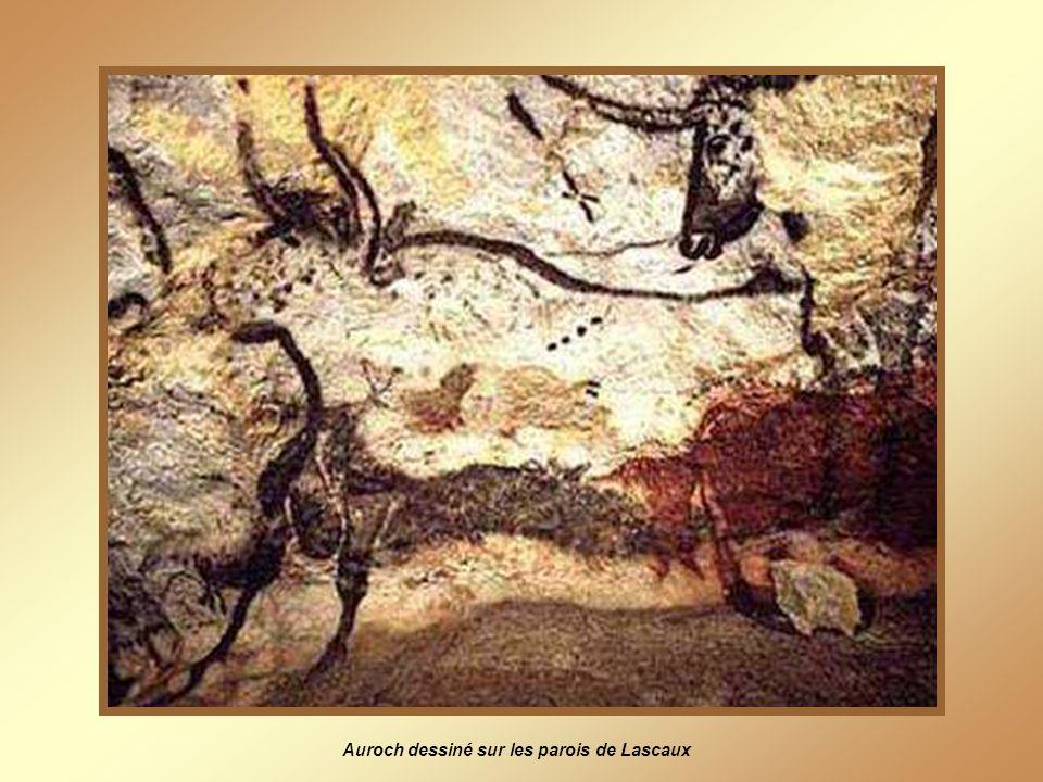 Auroch dessiné sur les parois de Lascaux