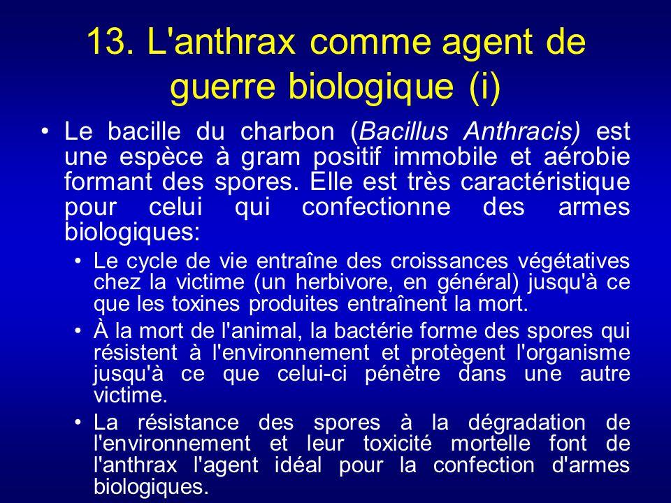 13. L anthrax comme agent de guerre biologique (i)