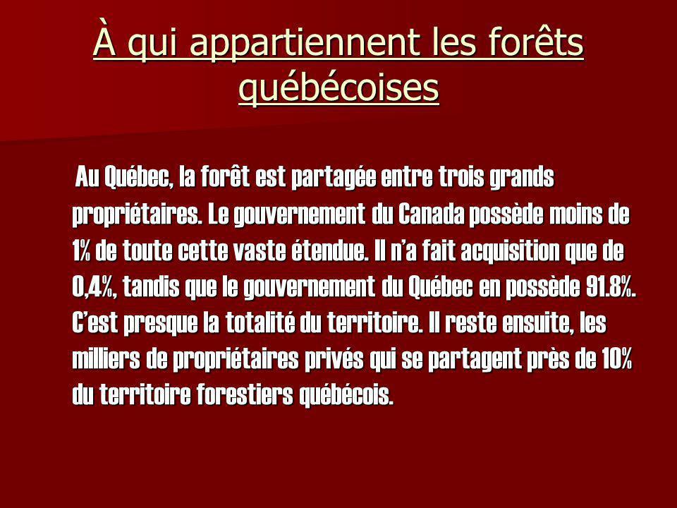 À qui appartiennent les forêts québécoises