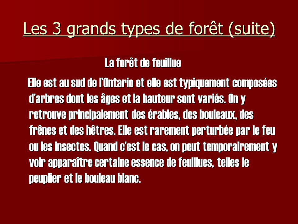 Les 3 grands types de forêt (suite)