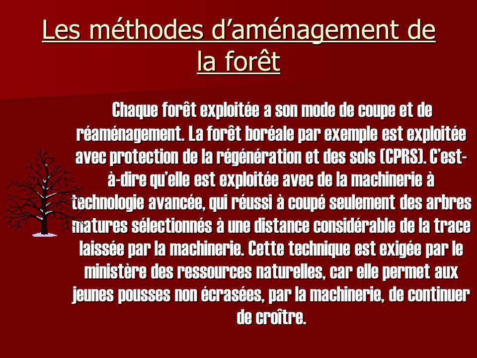 Les méthodes d'aménagement de la forêt