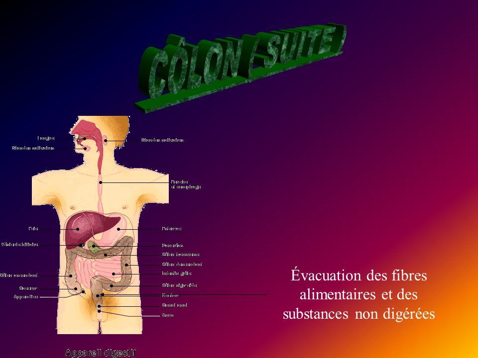 Évacuation des fibres alimentaires et des substances non digérées