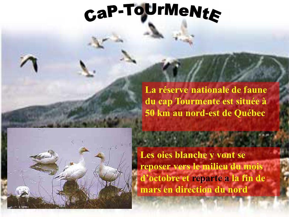 CaP-ToUrMeNtE La réserve nationale de faune du cap Tourmente est située à 50 km au nord-est de Québec.
