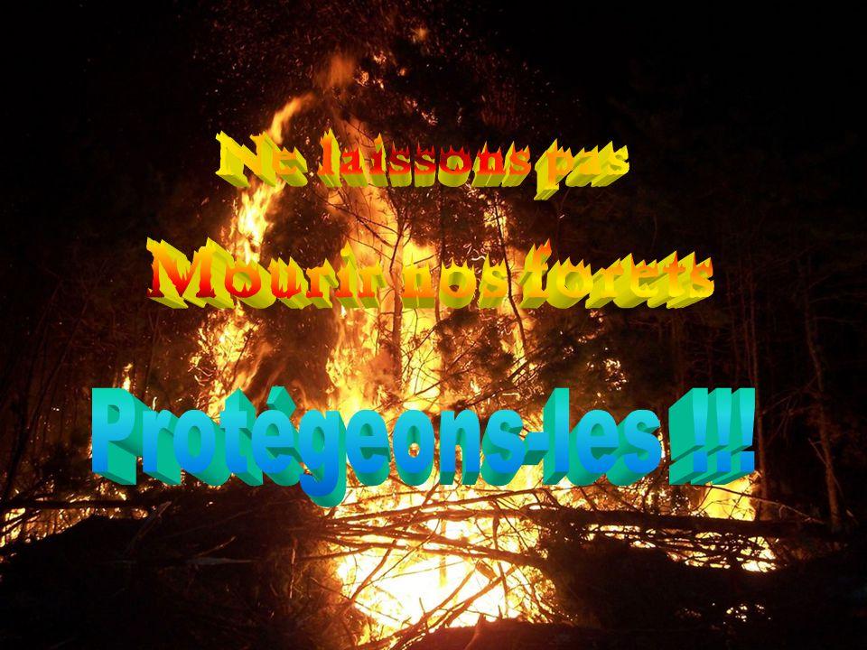 Ne laissons pas Mourir nos forets Protégeons-les !!!