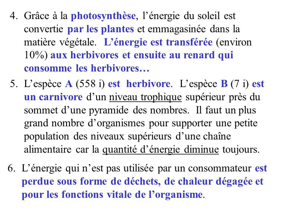 Grâce à la photosynthèse, l'énergie du soleil est convertie par les plantes et emmagasinée dans la matière végétale. L'énergie est transférée (environ 10%) aux herbivores et ensuite au renard qui consomme les herbivores…
