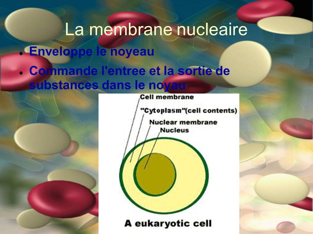 La membrane nucleaire Enveloppe le noyeau