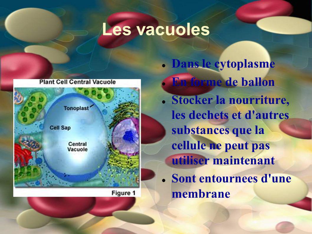 Les vacuoles Dans le cytoplasme En forme de ballon